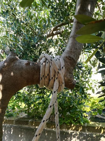 Nodo altalena - Ghiotto e Pastrocchio